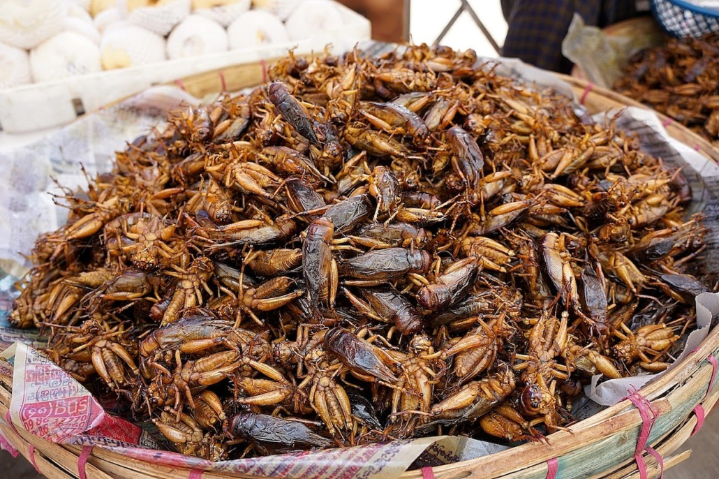 Fried-grasshopeprs-myanmar